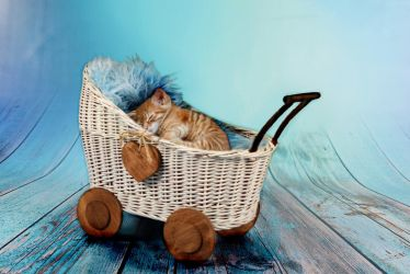 sleeping cat baby in doll pram by paulchenpanter59