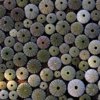 URCHINS by ANOZER