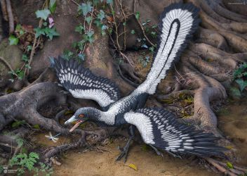 Archaeopteryx by Swordlord3d