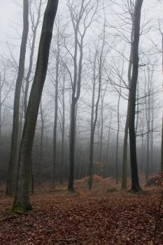 Foggy Forest 21 by sacral-stock