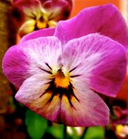 Pansy by KateHodges