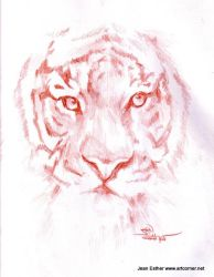 tiger face by Jesther101
