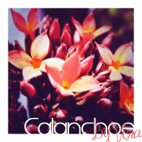 Calanchoe by VeraCotuna