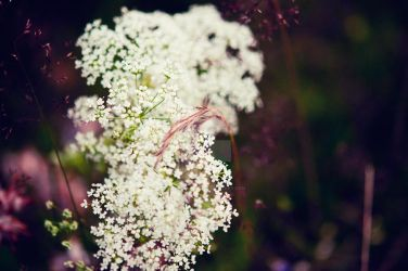 White flowers by MbOscarsson