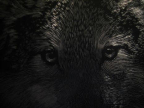 Silver Wolf close up by noonetells