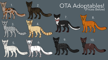 OTA Cat Adoptables by CarelessCuriosity