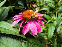 Bee on Flower by JamesDarrow