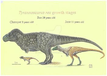 Tyrannosaurus rex growth stages by PedroSalas