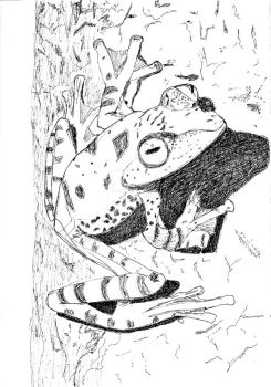 Coloring Page tree frogs 2.26.18 by Pyragus