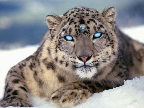 Snow Leopard by ortizlgnd