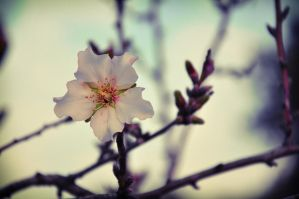 The First Breath of Spring by Mega-Shots