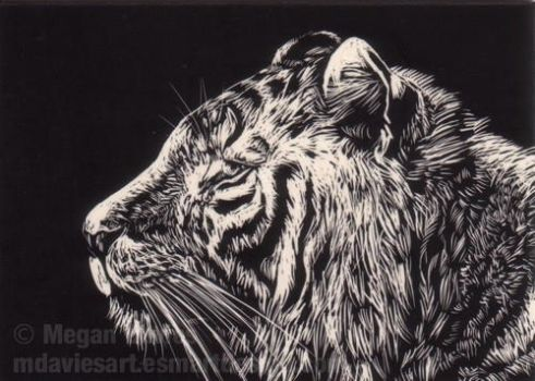 White Tiger -Scraperboard ACEO by Pannya