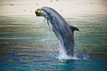 Jumping dolphin with ball by LeGreg
