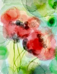 Poppies by KateHodges