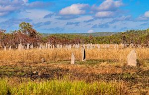 Litchfield National Park - Termite Mounds by TarJakArt
