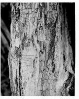 Wood by Che-Gue-Petey