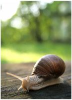 Snail by munsils