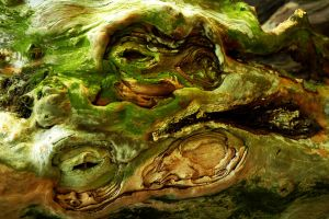 Taxus Toad in the Hole by Earth-Hart
