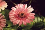 Pretty in pink by cmm9200