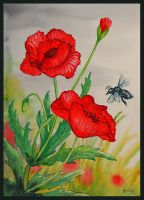 Poppies by GwilymG