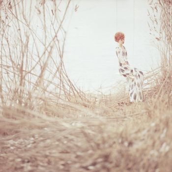 wildflowers by oprisco
