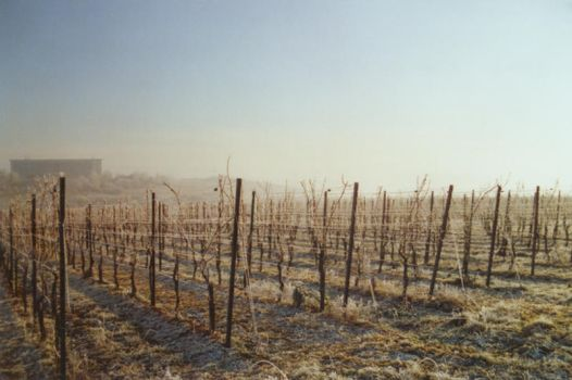 Wine Winter 2 by yushu