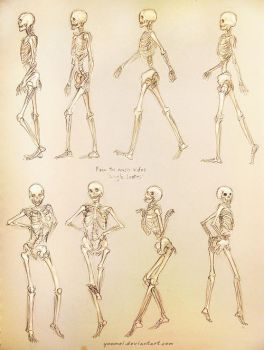 Single Ladies Skeleton Study by yuumei