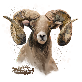Mountain Sheep by Kajenna