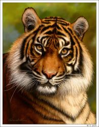 Tiger by wendelin