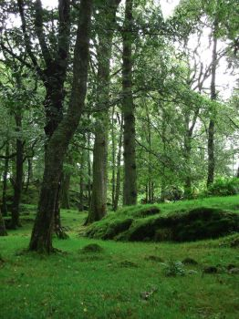 Ireland forest by GoblinStock