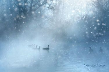 Canadian Geese winter by ForeverCreative