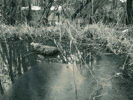 Forgotten Pond by quidprosno