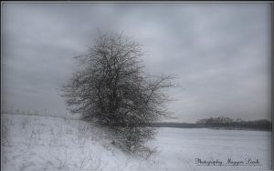January in Hungary. HDR-picture. by magyarilaszlo
