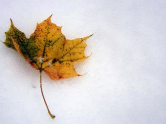 First snow of 2012 by asilaydyingdl