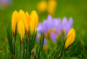 Nature colours early this year... by clochartist-photo