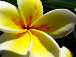Yellow and white flower by juvieira