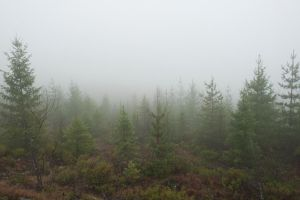 Misty Forest Stock by leeorr-stock