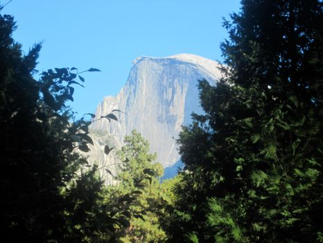 Half Dome from Yosemite Valley Floor by marylysander