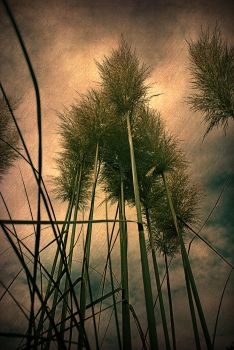 brooms by Theressa