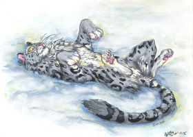 Snow leopard on the snow by J-C