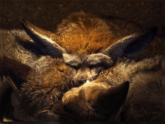 Safe and Warm by Narked-Photographer