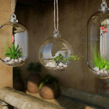 Glas for plants by freuby