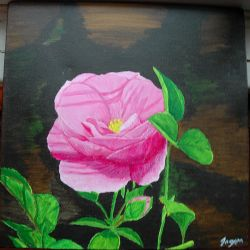 Anatomy of a Rose by Janorien