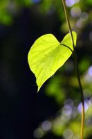 Just leaf... by PatriciaVazquez