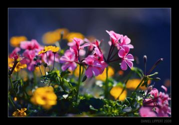 Dreamy Flowers by Usabell12