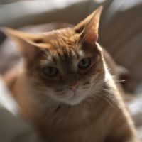 Po on the bed III by Ennev