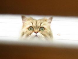 I See You by Kitteh-Pawz