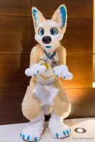 Puppy Paws by Sockune