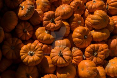 Collection of bright orange miniature pumpkins by stretchc