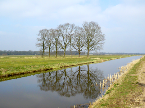 7 trees in the polder by bladit